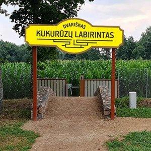 Nauja pramoga Rokiškio rajone – atidaromas kukurūzų labirintas