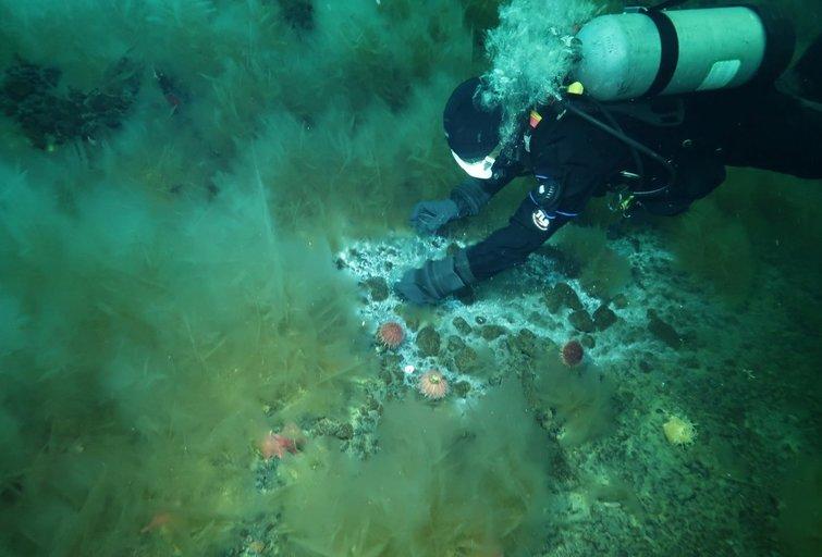 Mokslininkas Andrew Thurberas vandenyno dugne ima mikroorganizmų pavyzdžius (nuotr. SCANPIX)