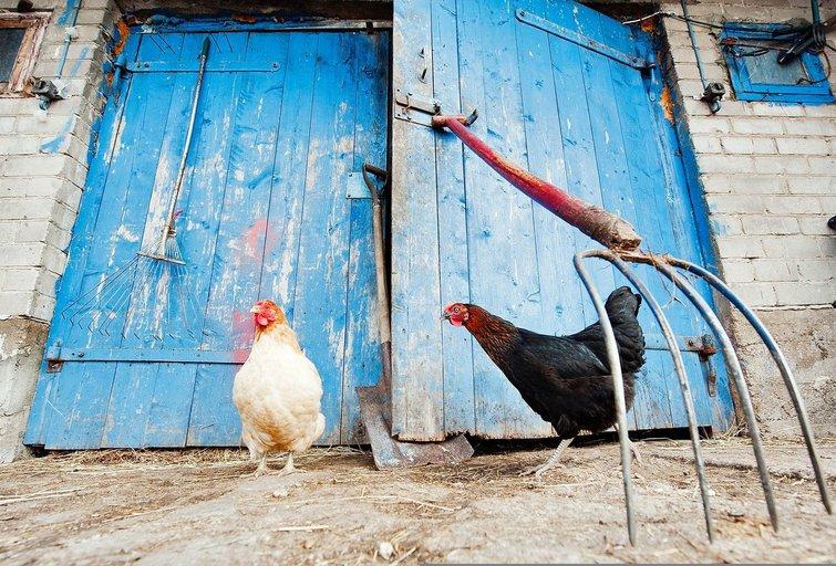 Ūkis (nuotr. Fotodiena.lt/Audriaus Bagdono)