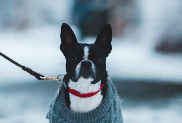 Šuo (Nuotr. Erik Mclean, Pexels)