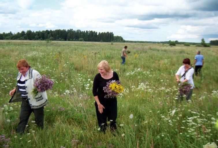 Trakiškio bendruomenės žolininkės renka vaistinguosius augalus (nuotr. asm. archyvo)