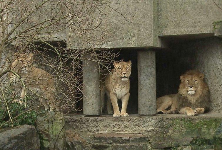 Zoologijos sodas (nuotr. stop kadras)