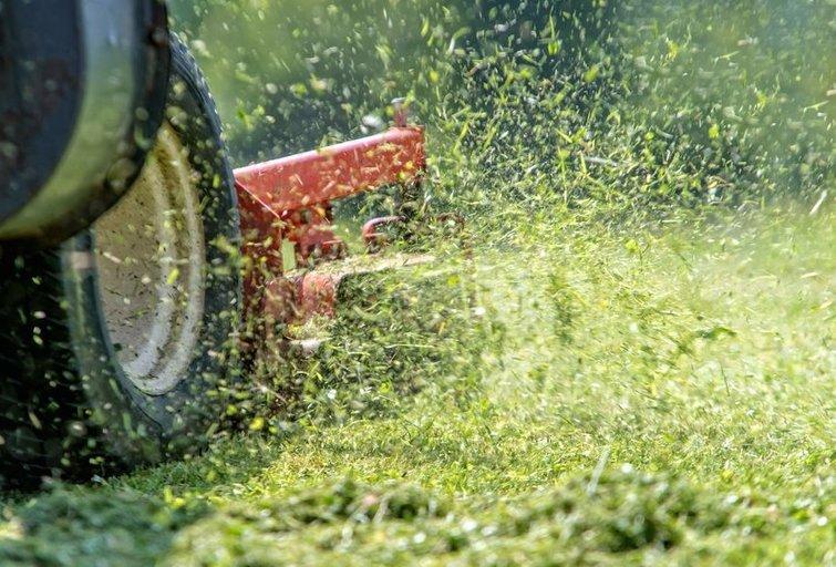 Vejapjovė (nuotr. Shutterstock.com)