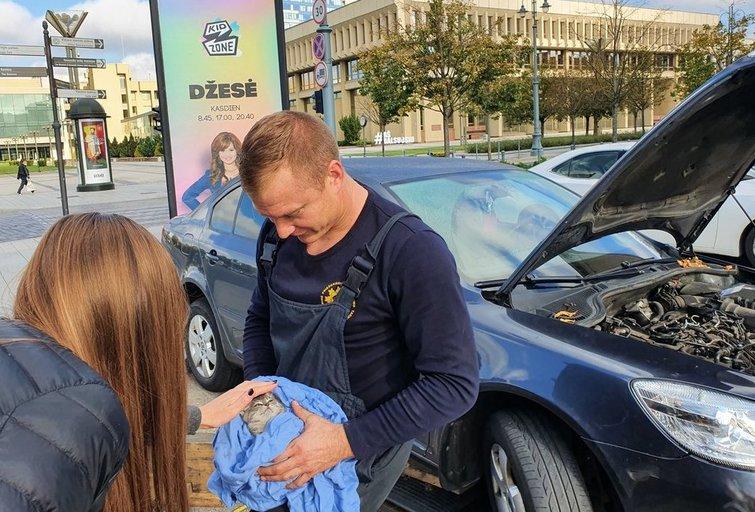 Vilniaus gelbėtojai prie Seimo vadavo automobilyje užstrigusį kačiuką (nuotr. Broniaus Jablonsko)