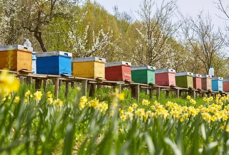 Aviliai (nuotr. Shutterstock.com)