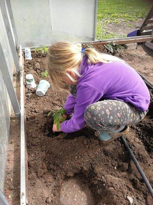 Prižiūrėti pomidorus padėjo dukra Paulina