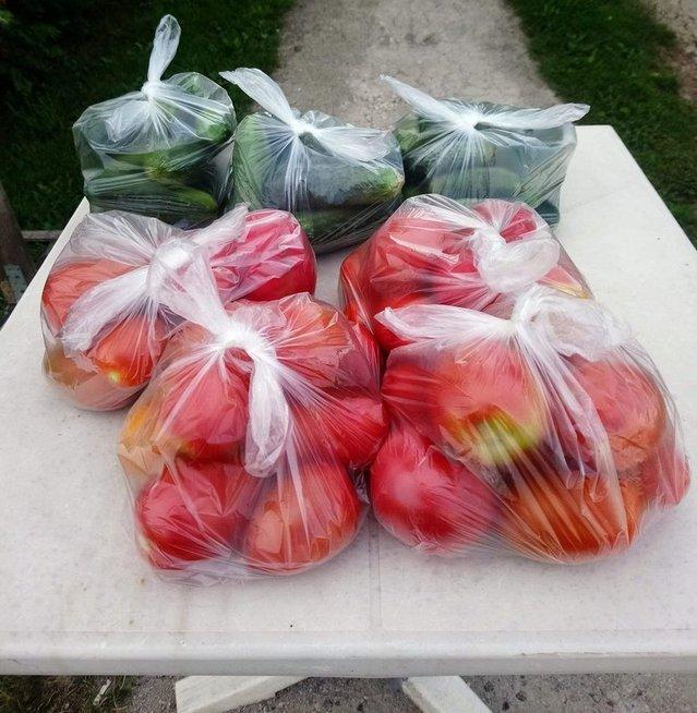 daržovės: agurkai ir pomidorai, D. Kuprijanovo nuotr.