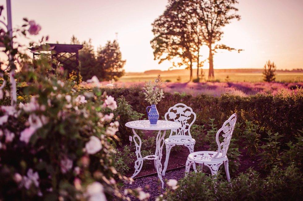 Levandų ūkis (nuotr. Sonst Photography)
