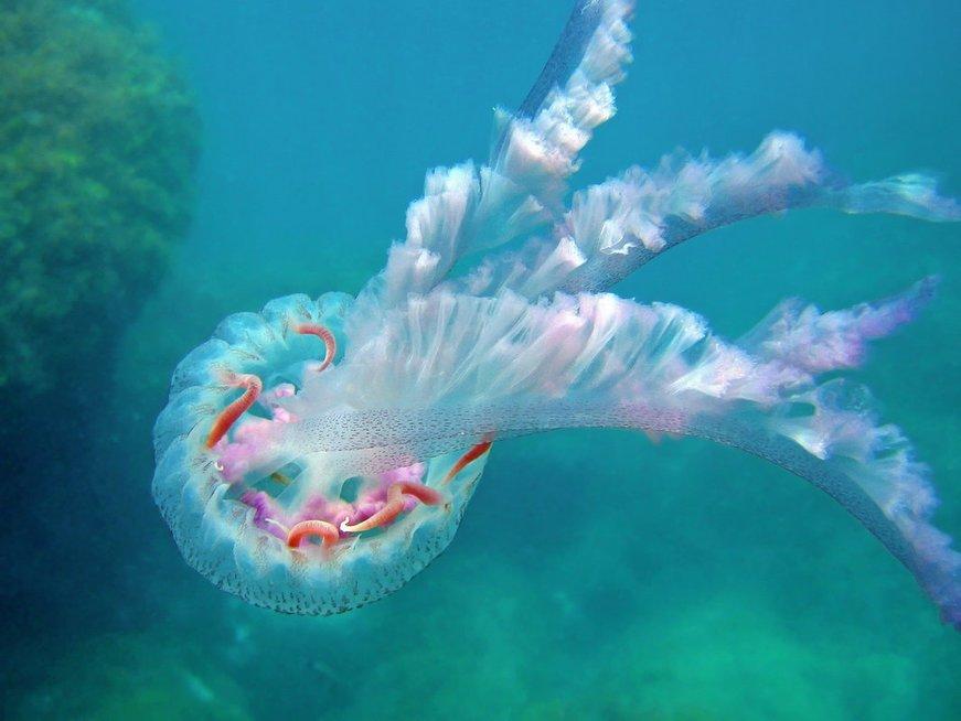 Medūza (nuotr. Fotolia.com)