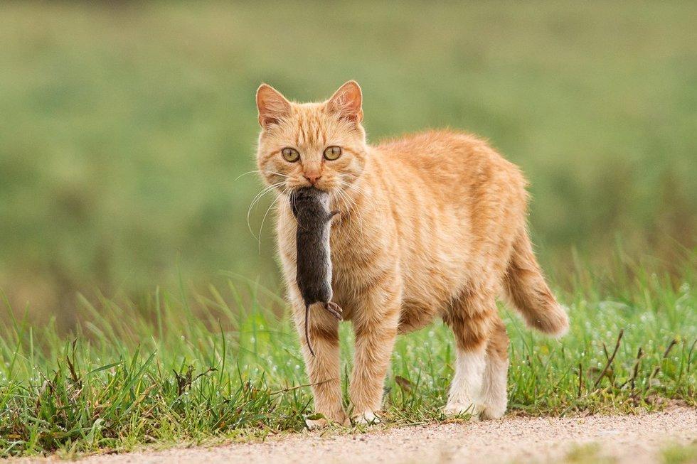 Gamtos šedevrus fiksuojanti lietuvė: akistatos su gyvūnais gniaužia kvapą Miglė Tarasevičiūtė