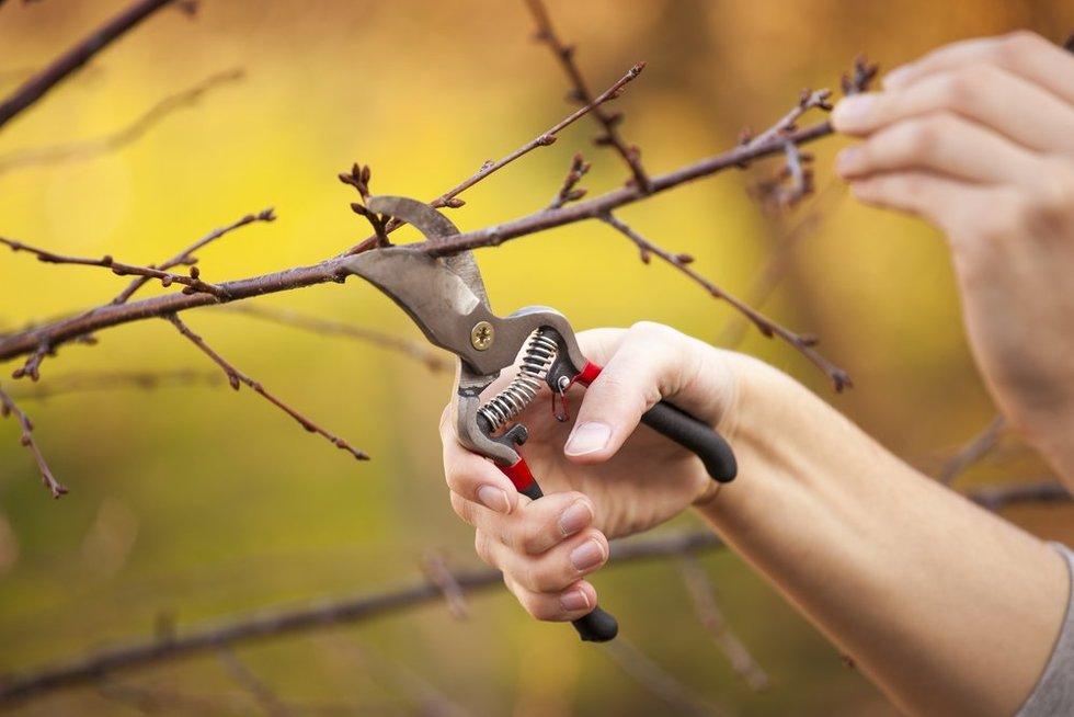 Ekspertas atskleidė auksinius sodo patarimus: nekartokite šių medžių priežiūros klaidų