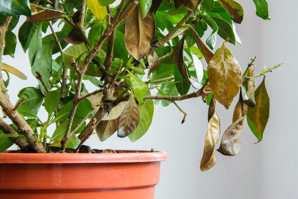 Kambarinių augalų priežiūra