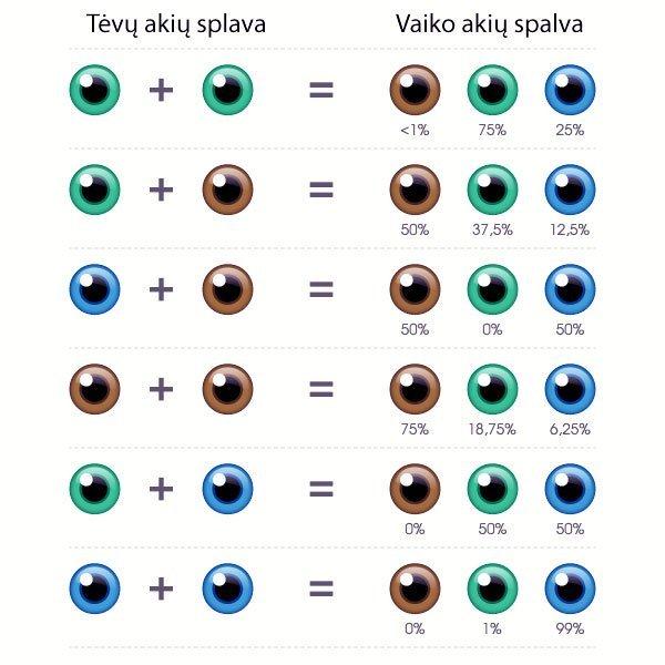 Vaiko akių spalvos tikimybė