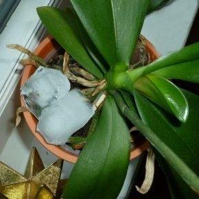 Orchidėjos (nuotr. pinterest.com)