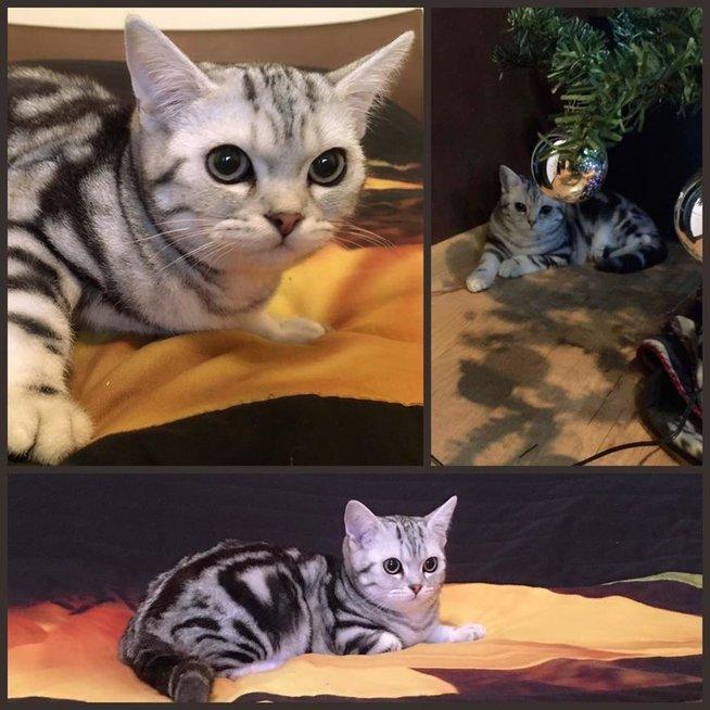 """Sandros Žutautienės katinas Lexusas (nuotr. asmeninio albumo (""""Facebook"""")"""