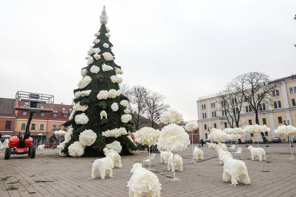 Parodė, kaip atrodys Kauno kalėdinė eglė
