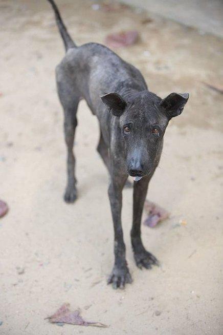 Rasos Skridailaitės ir Manto Pralgausko išgelbėti šunys Tailande