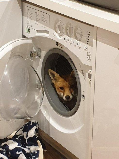 Radinys skalbimo mašinoje pribloškė mamą: nustebsite, ką ji pamatė