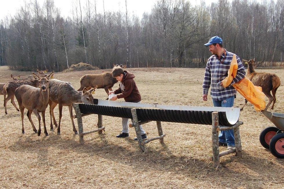 Šimonėlių šeima gyvenimą Amerikoje iškeitė į elnių auginimą kaime