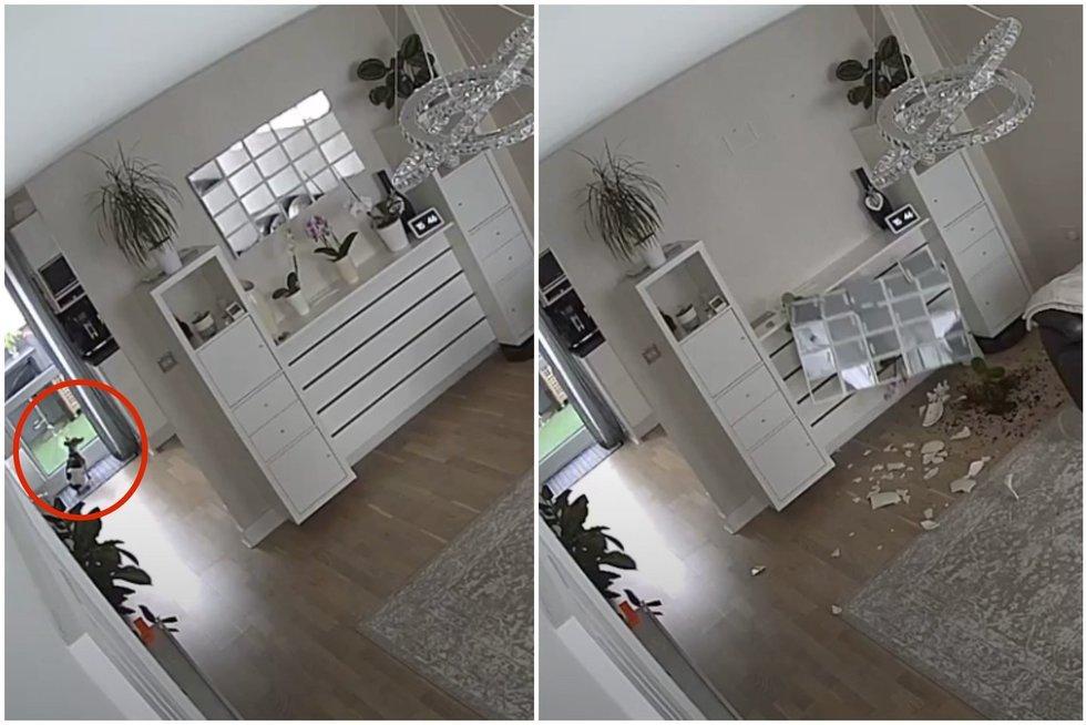 Šuo sulojo ir nukrito veidrodis (nuotr. stop kadras)