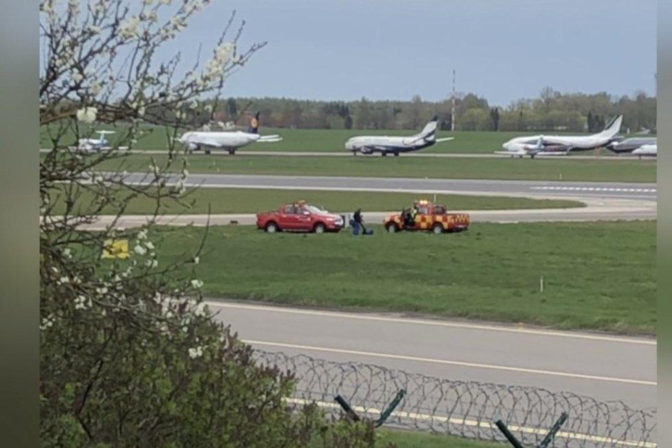 Liudininkė nufilmavusi lapės incidentą Vilniaus oro uoste: išsitraukė kastuvą, įsidėjo į maišą ir išvažiavo (nuotr. stop kadras)