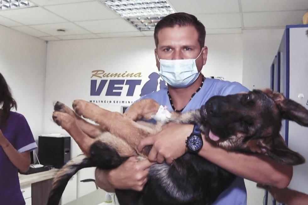 Veterinaras Morkūnas gelbėjo partrenktą šunį Hugo: pamatykite, kuo viskas baigėsi
