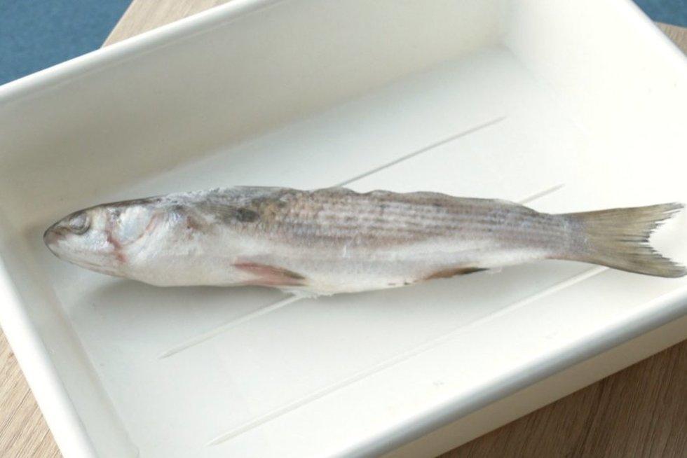 Baltijos jūroje – naujokė:žvejai mokslininkams pristatė dar nematytą žuvį (nuotr. stop kadras)
