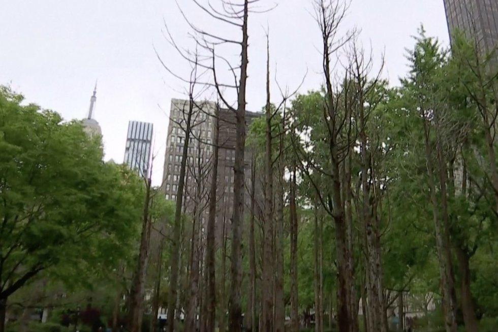 Mirusių medžių paroda Manhetene primena apie klimato kaitą (nuotr. stop kadras)