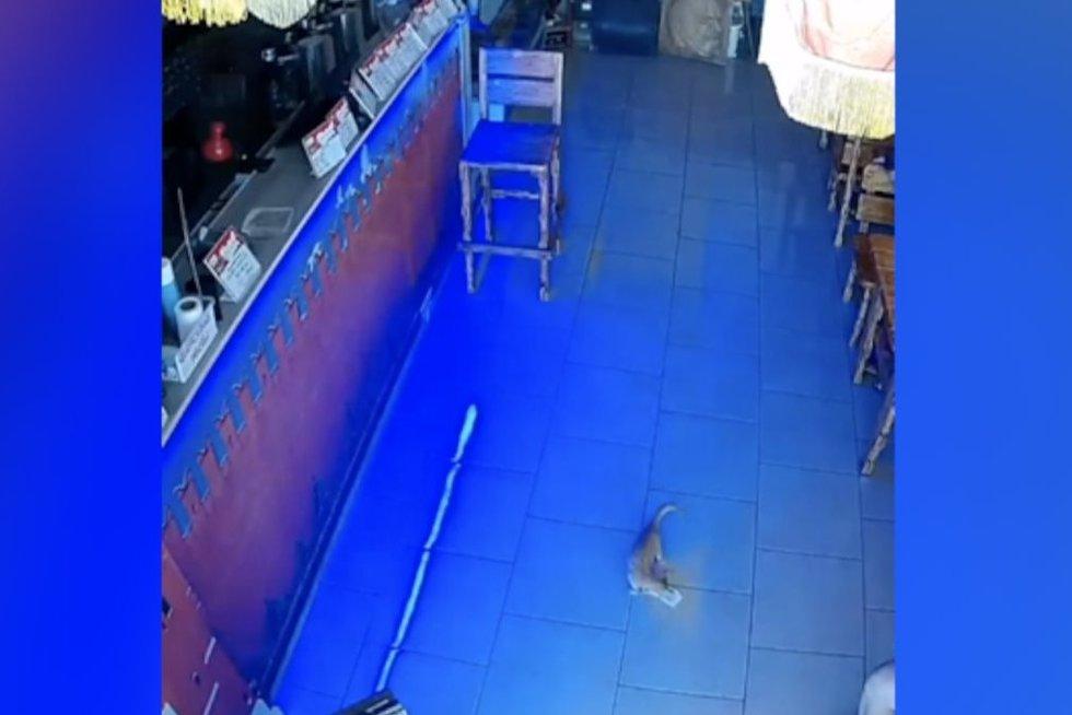 Katinas (nuotr. stop kadras)