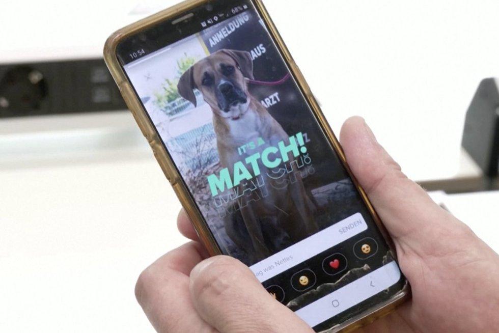 """Šunų """"Tinderis"""" užkariauja Vokietiją: keturkojo draugo ieško per programėlę (nuotr. stop kadras)"""
