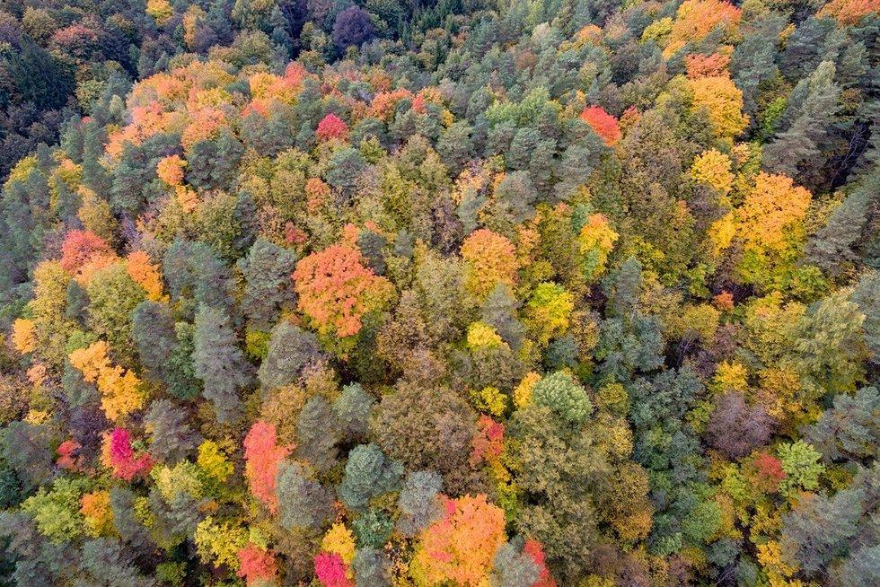 miškas (nuotr. Broniaus Jablonsko)