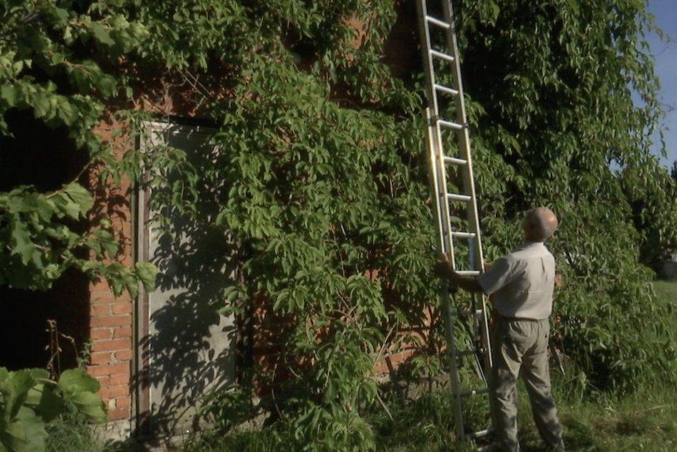 Rekordinis egzotinių uogų derlius Lietuvoje: ši – tikra vitamino C bomba