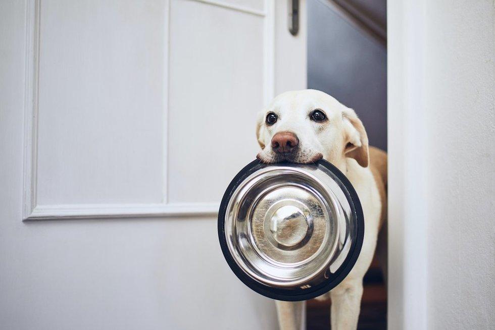 Šuo (nuotr. shutterstock.com)