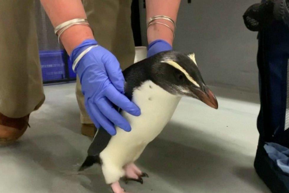 pingvinas (nuotr. stop kadras)
