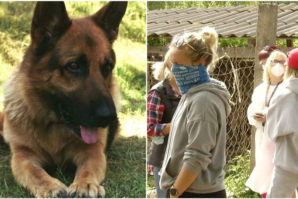 Atviri gyvūnų teisių savanorės liudijimai: aktyvistai persekiojami, kėsinamasi į jų gyvybes (tv3.lt koliažas)