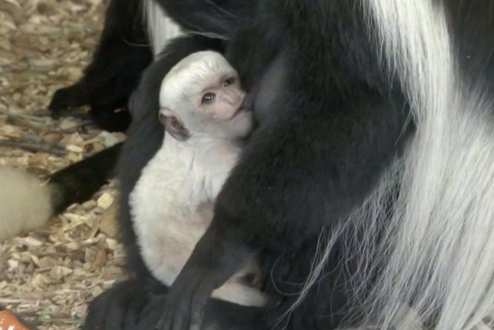 Šunbeždžionė (nuotr. stop kadras)