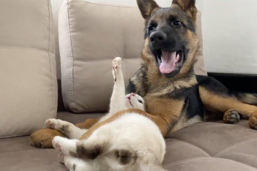 Mieliau nebūna: užfiksavo žaismingas šuns ir katino peštynes